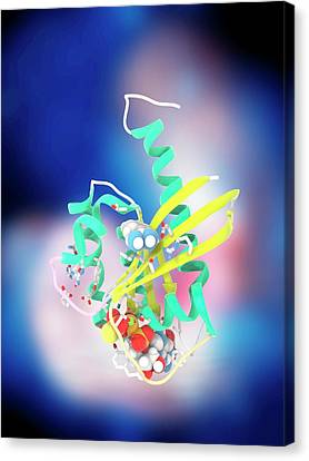 K-ras Benzamidine And Gtp Complex Canvas Print