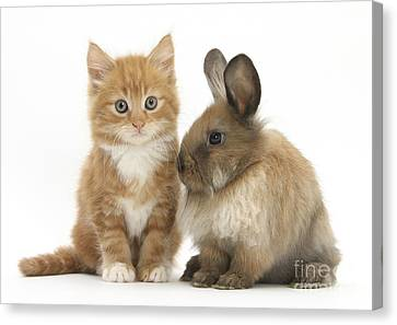 Kitten And Young Rabbit Canvas Print