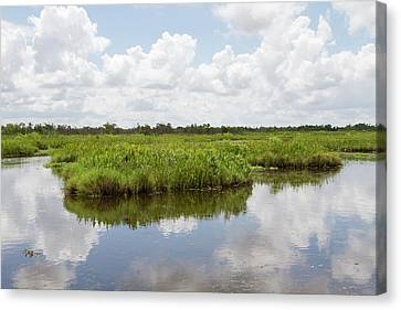 Jamie Canvas Print - La, Lafitte, Airboat Swamp Tour by Jamie and Judy Wild