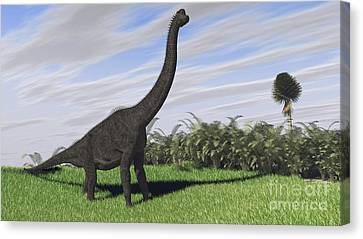 Large Brachiosaurus In An Open Field Canvas Print
