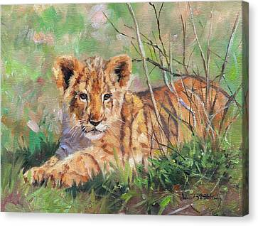 Lioness Canvas Print - Lion Cub by David Stribbling