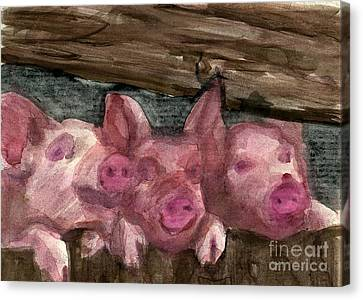 3 Little Pigs Canvas Print by Sandra Stone