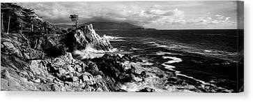 Lone Cypress On The Coast, Pebble Canvas Print