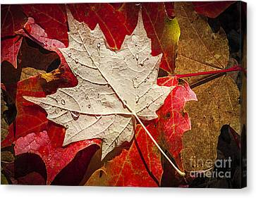 Wet Leaves Canvas Print - Maple Leaves In Water by Elena Elisseeva