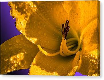 Mellow Yellow Canvas Print by Brian Stevens