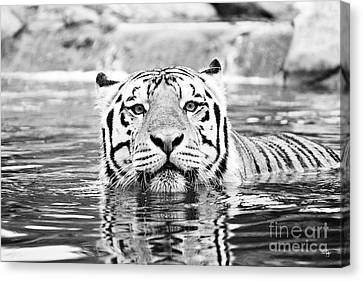 Mike - Bw Canvas Print