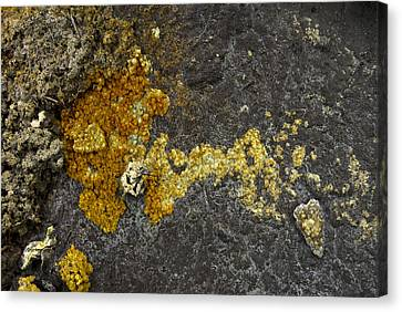 Mineral Texture Canvas Print by Pablo Romero