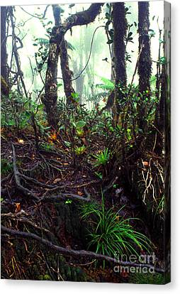 Misty Rainforest El Yunque Canvas Print by Thomas R Fletcher