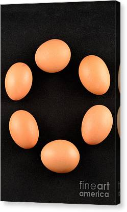 Organic Eggs Canvas Print