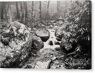 Otter Creek Wilderness Canvas Print by Thomas R Fletcher