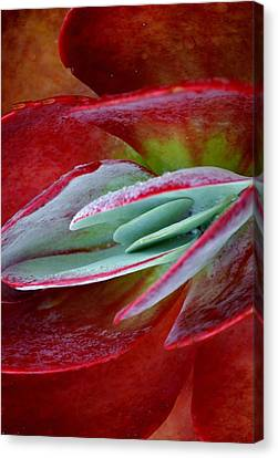 Paddle Plant Canvas Print by Werner Lehmann