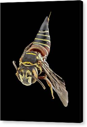 Parasitic Bee Canvas Print