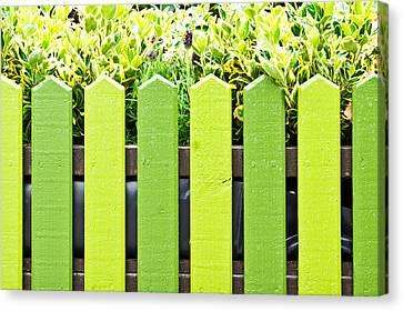 Picket Fence Canvas Print by Tom Gowanlock