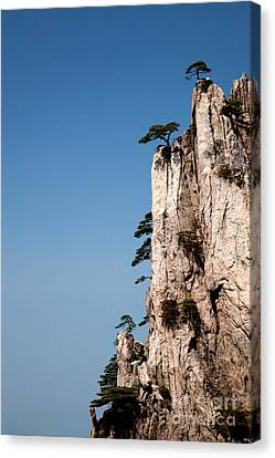 Canvas Print - Pine Trees On Huangshan Mountain China by Fototrav Print