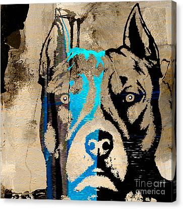 Bull Canvas Print - Pitbull by Marvin Blaine