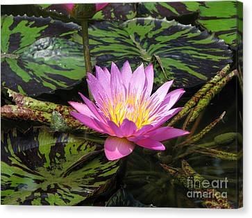 Pond Series Canvas Print by Amanda Barcon