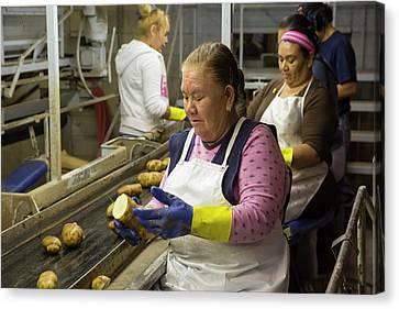 Potato Processing Plant Canvas Print by Jim West