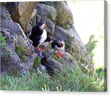 3 Puffins Canvas Print by George Leask