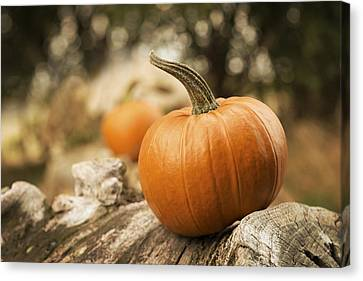 Country Lanes Canvas Print - Pumpkins by Amanda Elwell