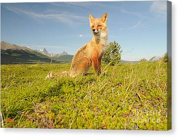 Red Fox Pup Canvas Print