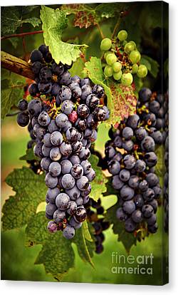Red Grapes Canvas Print by Elena Elisseeva