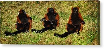3 Red Ruffed Lemur Boys Canvas Print