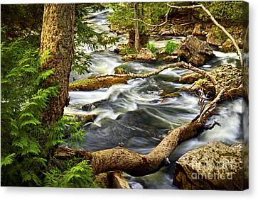 River Rapids Canvas Print by Elena Elisseeva