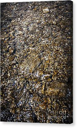 Rocks In Water Canvas Print by Elena Elisseeva