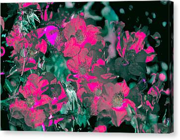 Rose 72 Canvas Print by Pamela Cooper