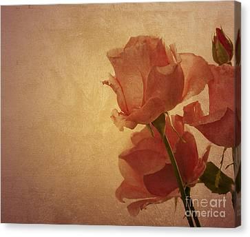 Parchment Canvas Print - Roses by Jelena Jovanovic