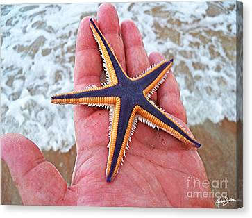 Royal Starfish - Ormond Beach Florida Canvas Print by Melissa Sherbon