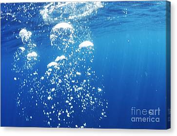Scuba Diver's Bubbles Rising-up To Surface Canvas Print by Sami Sarkis