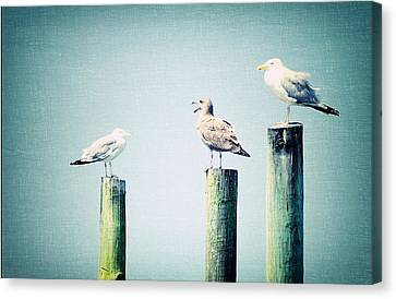 3 Seal Gulls Canvas Print by Dick Wood