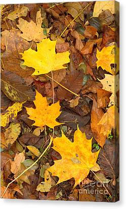 Canvas Print featuring the photograph 3 Shades Of Yellow by Jim McCain