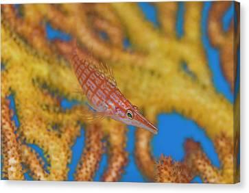 South Pacific, Solomon Islands Canvas Print by Jaynes Gallery