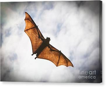 Spooky Bat Canvas Print by Craig Dingle