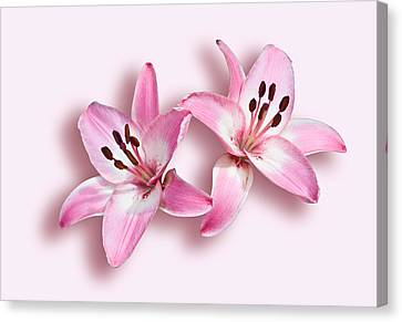 Spray Of Pink Lilies Canvas Print by Jane McIlroy