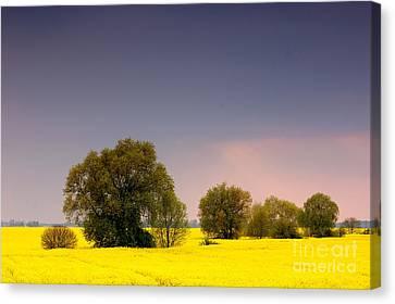 Spring Landscape Canvas Print by Michal Bednarek