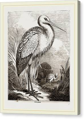 Stork Canvas Print by Litz Collection