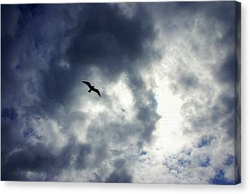 Canvas Print featuring the photograph Storm Flyer by Marilyn Wilson