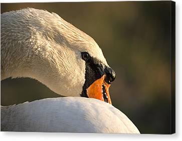 Swan Canvas Print by Michael Mogensen