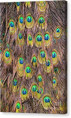 Peacocks Canvas Print - Tail Feathers Of Peacock by George Atsametakis