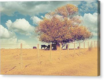 Fence Row Canvas Print - The Cow Tree by Amy Tyler