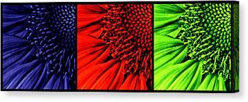 3 Tile Sunflower Colors Canvas Print