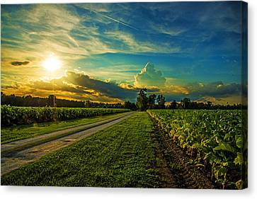 Tobacco Road Canvas Print by John Harding