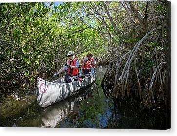 Tourists Canoeing In Mangrove Swamp Canvas Print by Jim West