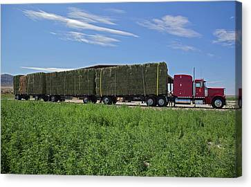 Bales Canvas Print - Transporting Bales Of Hay by Jim West