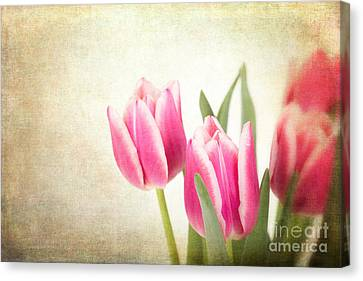 Tulips Vintage Canvas Print by Jane Rix
