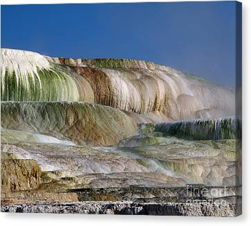 Upper Terrace At Mammoth Hot Springs Canvas Print by Tracy Knauer