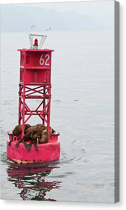 Us, Ak, Inside Passage Canvas Print